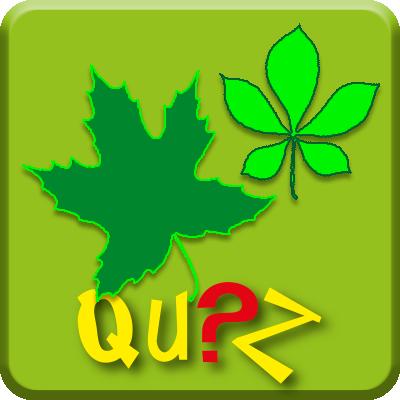 Online-Game: Wer kann die Blätter den Bäumen richtig zuordnen
